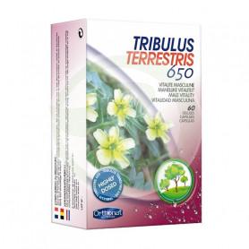 Tribulus Terrestris 650 60 Cápsulas Orthonat