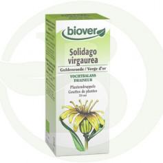Extracto de Solidago Virgaurea (Vara de Oro) Biover