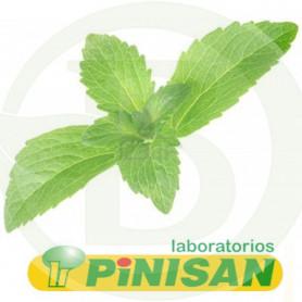 Stevia En Planta 50Gr. Pinisan