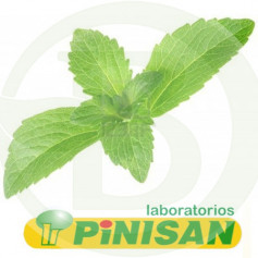 Stevia En Planta 40Gr. Pinisan